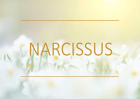 fragrance-trends-winter-2019-narcissus